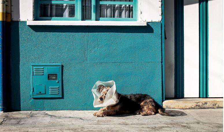 Dog-with-collar