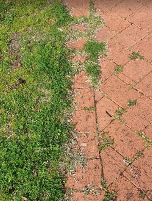 芝生 縁の部分